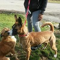 Adopt A Pet :: layla - Prestonsburg, KY