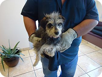Terrier (Unknown Type, Medium) Mix Dog for adoption in Grants, New Mexico - Lilly
