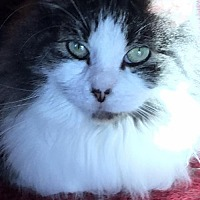 Adopt A Pet :: JOJO - Absecon, NJ