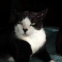 Adopt A Pet :: Andrew - Tustin, CA