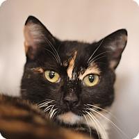 Adopt A Pet :: Twix - El Cajon, CA