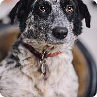 Adopt A Pet :: Mama - Portland, OR