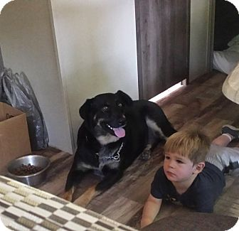 German Shepherd Dog Mix Dog for adoption in Albemarle, North Carolina - Django / Zander