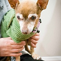 Adopt A Pet :: Bambi - Fremont, CA