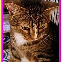 Adopt A Pet :: Harley1 - Berkeley Springs, WV