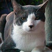 Adopt A Pet :: Bruno - New  York City, NY