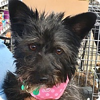 Adopt A Pet :: Margot - West Los Angeles, CA