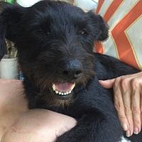 Adopt A Pet :: Luna - Goodlettsville, TN