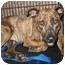 Photo 3 - Dutch Shepherd/Boxer Mix Dog for adoption in Richmond, Virginia - Muffin