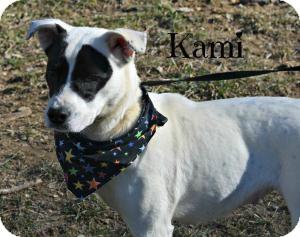 Boxer Mix Dog for adoption in Spruce Pine, North Carolina - Kami