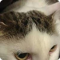 Adopt A Pet :: Kiki - Montreal, QC