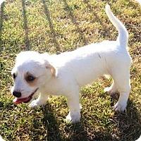 Adopt A Pet :: Enchilada - Gilbert, AZ