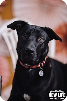 Labrador Retriever Mix Dog for adoption in Portland, Oregon - Lincoln