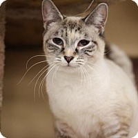 Adopt A Pet :: Portia - Cary, NC