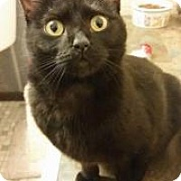 Adopt A Pet :: Ida Iceburg - LaGrange Park, IL