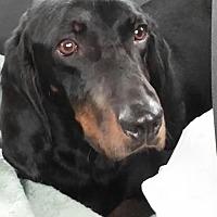 Adopt A Pet :: Alfie - Mishawaka, IN