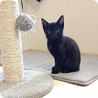 Adopt A Pet :: Wednesday - Winchester, VA