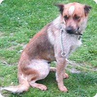 Adopt A Pet :: Vicky - Hillsboro, OH