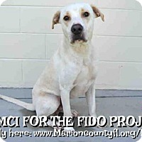 Labrador Retriever Mix Dog for adoption in Ocala, Florida - WILSON
