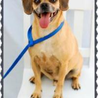 Adopt A Pet :: Mark (Sam) - Shohola, PA