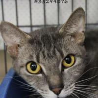 Adopt A Pet :: Muffin - Wilkes Barre, PA
