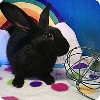 Adopt A Pet :: Daeven - Trenton, NC