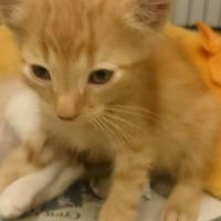 Adopt A Pet :: Kato - Greenville, KY