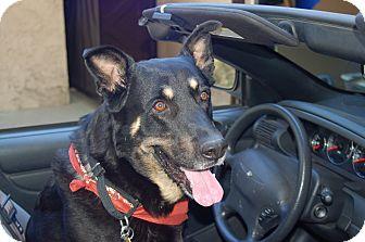 German Shepherd Dog Mix Dog for adoption in Corona, California - Barney