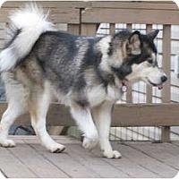 Adopt A Pet :: Sadie - Belleville, MI