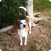 Adopt A Pet :: Peabody - Phoenix, AZ