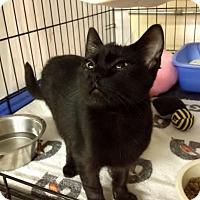 Adopt A Pet :: Merlin - Byron Center, MI