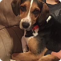 Adopt A Pet :: Wally - Morgantown, WV