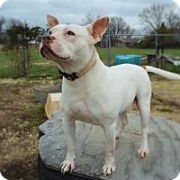 Adopt A Pet :: Mila - Bedminster, NJ