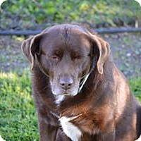 Adopt A Pet :: Nova - San Francisco, CA