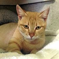 Adopt A Pet :: Chobee - Palm City, FL