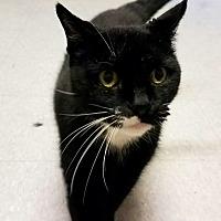 Adopt A Pet :: C-22 - Indianola, IA
