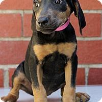 Adopt A Pet :: Mona - Waldorf, MD