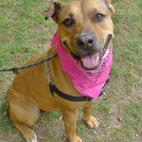 Adopt A Pet :: Peaches - Helena, AL