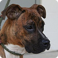Adopt A Pet :: Peanut - Hagerstown, MD