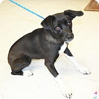 Adopt A Pet :: Betsie - Sparta, NJ