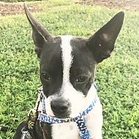 Adopt A Pet :: Clyde - Courtland, AL