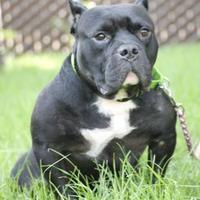 Adopt A Pet :: Neptune - Fresno, CA