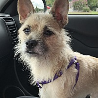Adopt A Pet :: Bogie - Long Island, NY