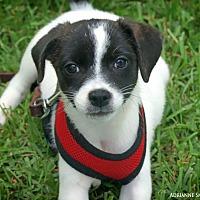 Adopt A Pet :: Nova - Fayetteville, GA