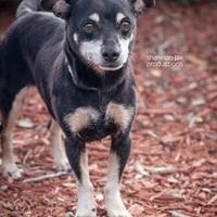 Adopt A Pet :: Scamper - Gainesville, FL