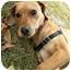 Photo 2 - Hound (Unknown Type)/Hound (Unknown Type) Mix Puppy for adoption in Milton, Massachusetts - Georgia