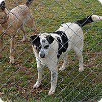 Adopt A Pet :: Casey - Conway, AR