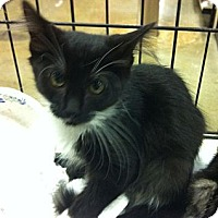 Adopt A Pet :: Alexa - Pittstown, NJ