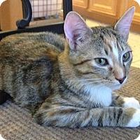 Adopt A Pet :: Nikki - Chandler, AZ