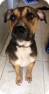Shepherd (Unknown Type) Mix Dog for adoption in Navarre, Florida - Benji